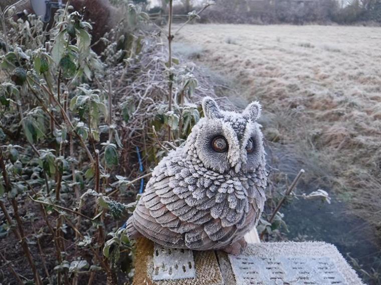 cold-owl-sml