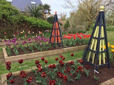 tulips sml